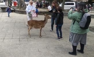 Petting Deer 1
