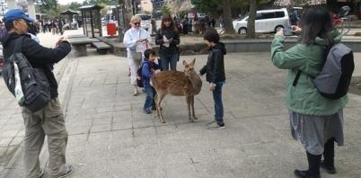 Petting Deer 2